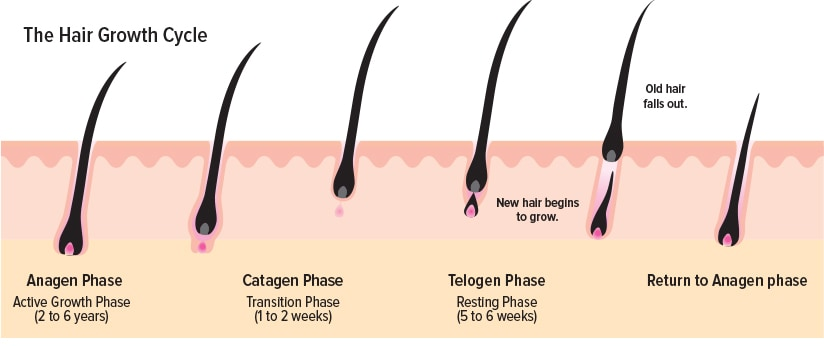 The Hair Growth Cyclic Process